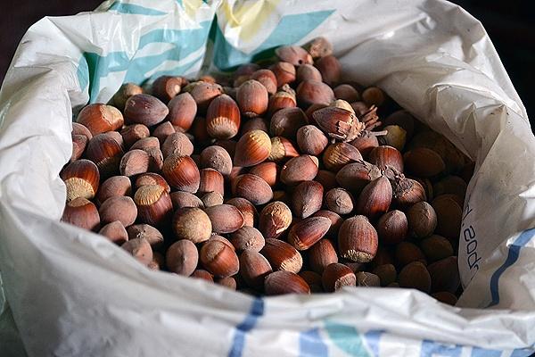 Hazelnuts by Laslo