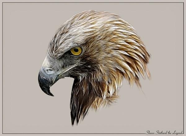 golden eagles portrait by shaunstothardthelegend