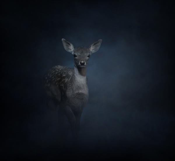 Through The Mist by clintnewsham