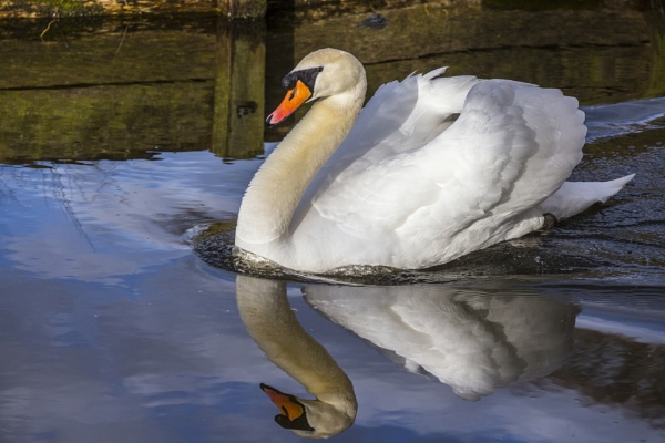 ugly duckling by mickthebrick