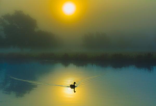 Serenity by ahesharpe