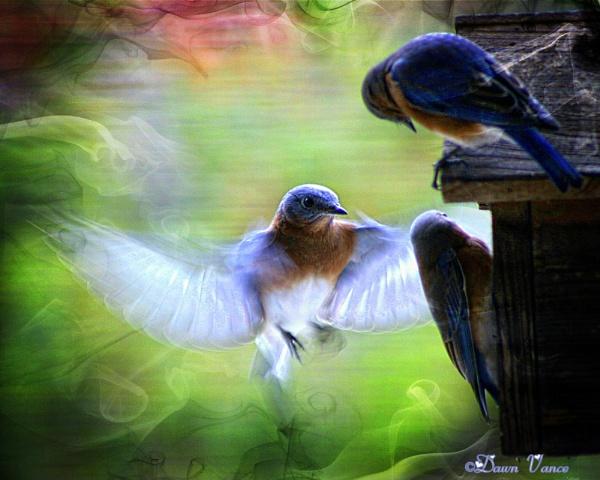 Flight by dawnmichelle