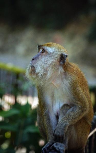 monkey Business by Silverzone