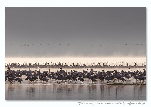 Nakuru Crowd by IngridVekemans