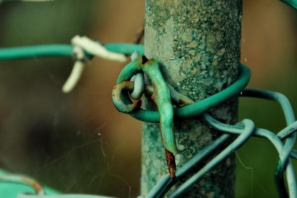 Green beauties... by Chinga