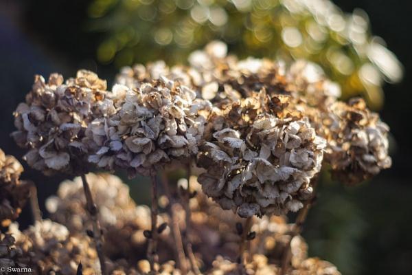 Floral XXII by Swarnadip