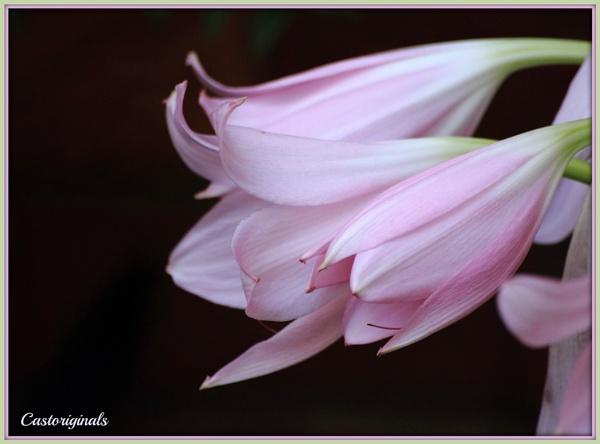 Pretty, Pastel Pink, Petals by Lynniesefforts