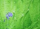 Blue & Green by markharrop