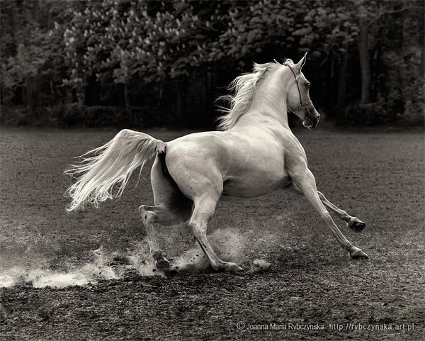 Horses 2013 #10 by missmoon