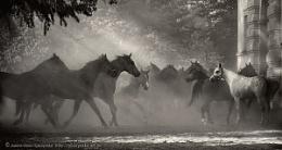 Horses 2013 #10 b&w