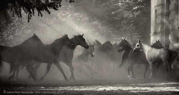 Horses 2013 #10 b&w by missmoon