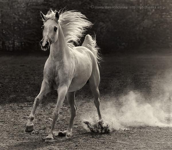 Horses 2013 #8 by missmoon