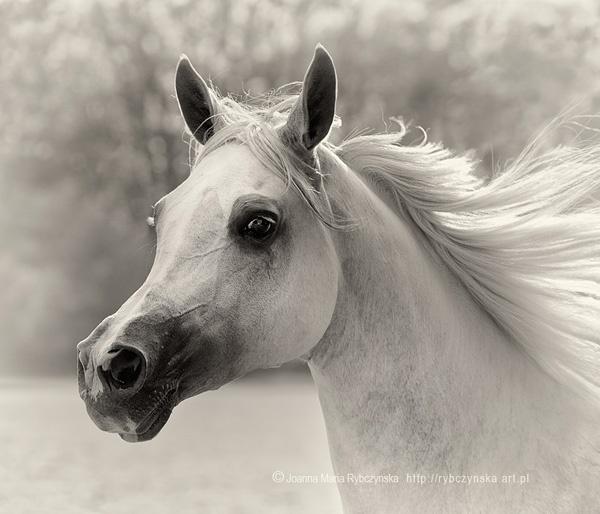 Horses 2013 #7 by missmoon