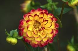 A single flower ..
