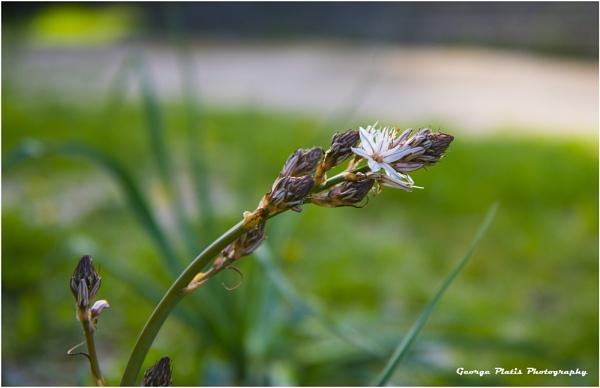 Spring time by GeorgePlatis