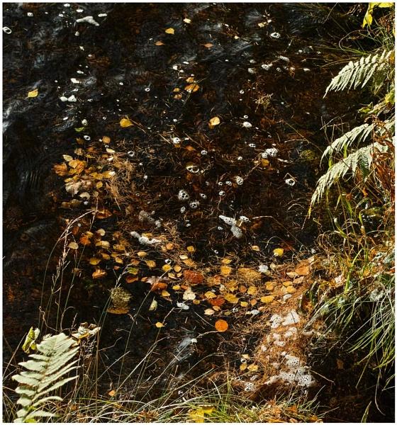 Needles & Bubbles... by Scottishlandscapes