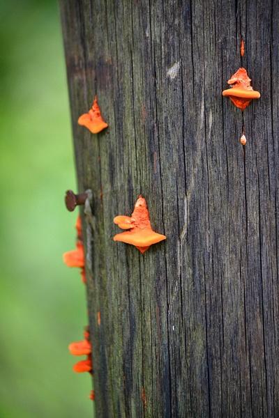 Mushroom by Davidroid