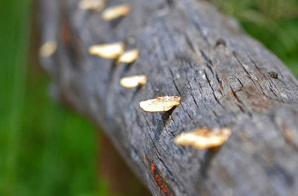 Mushroom 2 by Davidroid