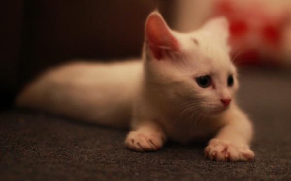 CAT by SOUL7