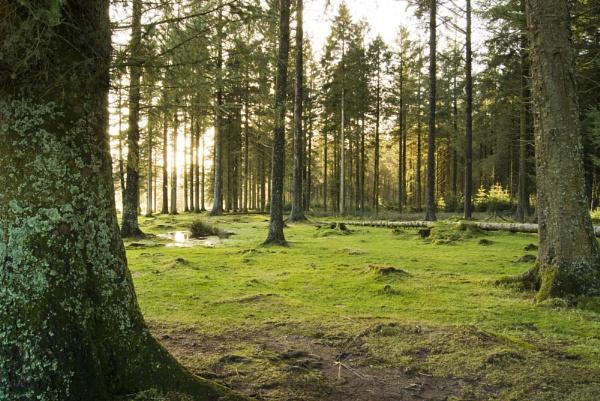 Quiet afternoon in Dartmoor by ambro