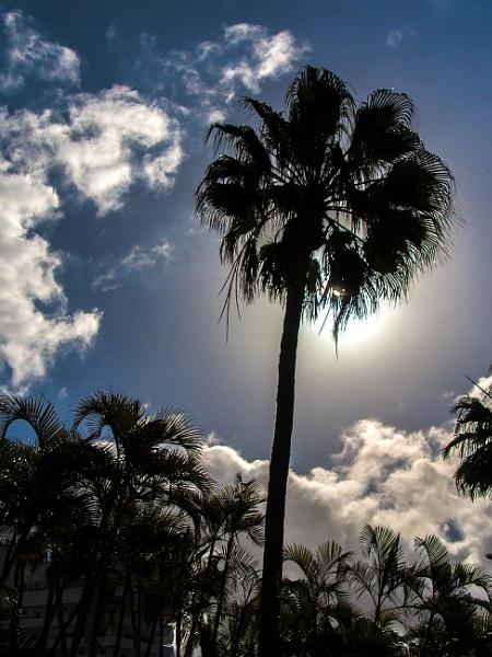 Palms And Sunlight by jason_e
