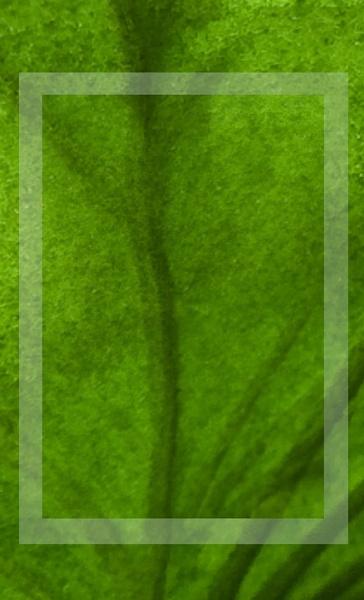 Anatomy of a Leaf by Joline