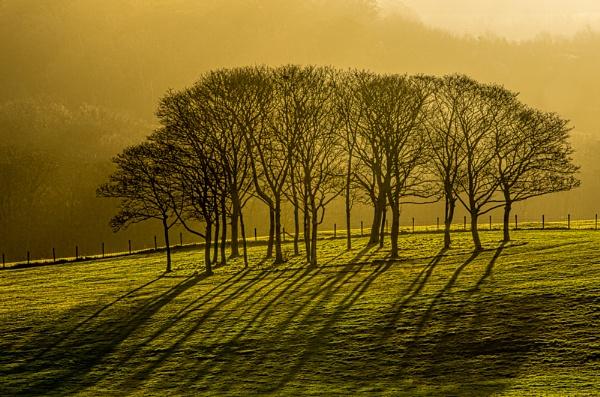 Trees in winter sun by Loudon