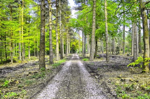 Hopwas Woods by probie