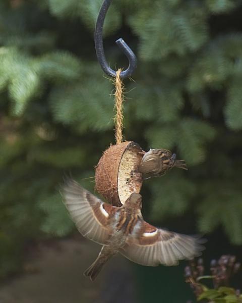 Sparrows by Ian G W