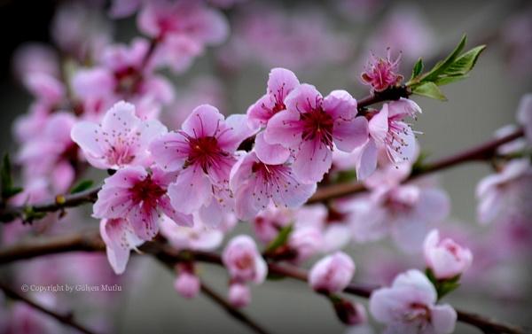 Bahar... by izida