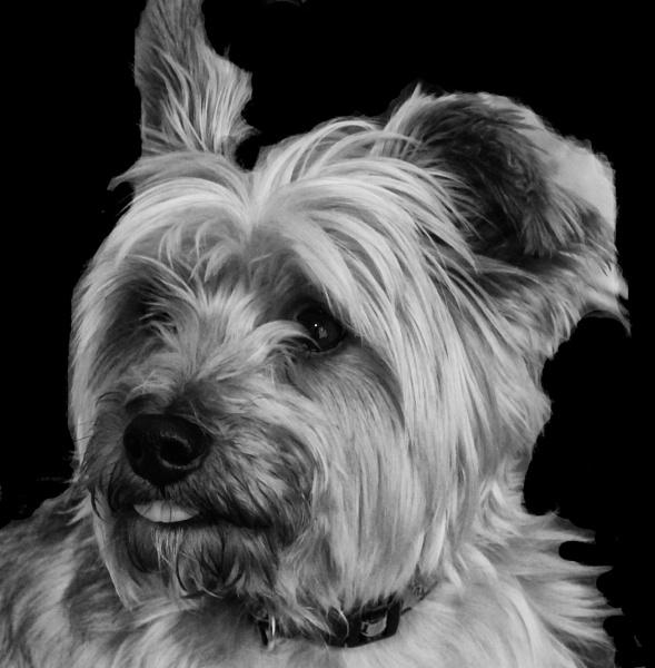 Buddy Portrait by brendish