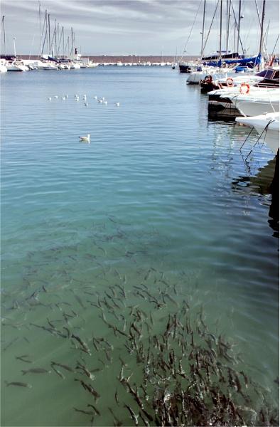 Fuengirola Fish Frenzy by Fefe