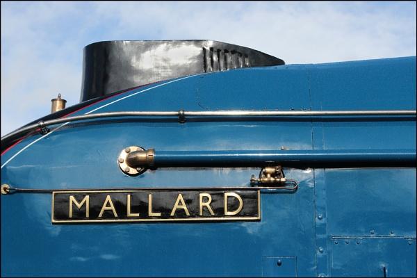 Mallard by JawDborn