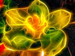 149-fractal orchid