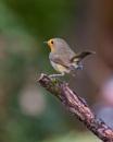 Back Garden Robin by MarkBullen