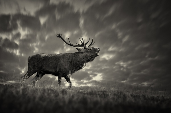 King of the Rut by tripodted