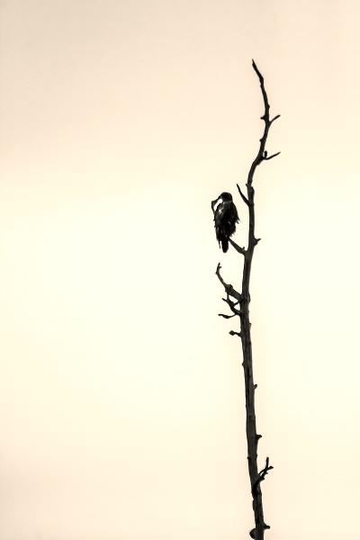 Bird of Prey by guitarman74uk