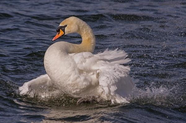 Splashing around! by franken