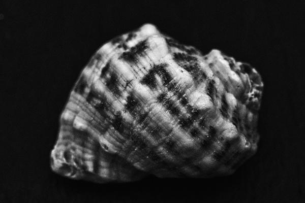 She Sells Sea Shells by FrankThomas