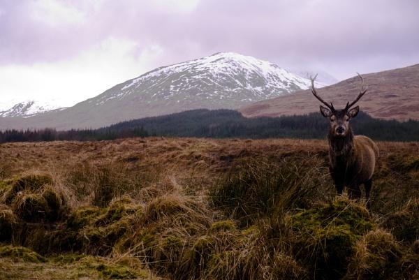 Deer by george-sewell