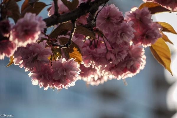 Floral XXIII by Swarnadip