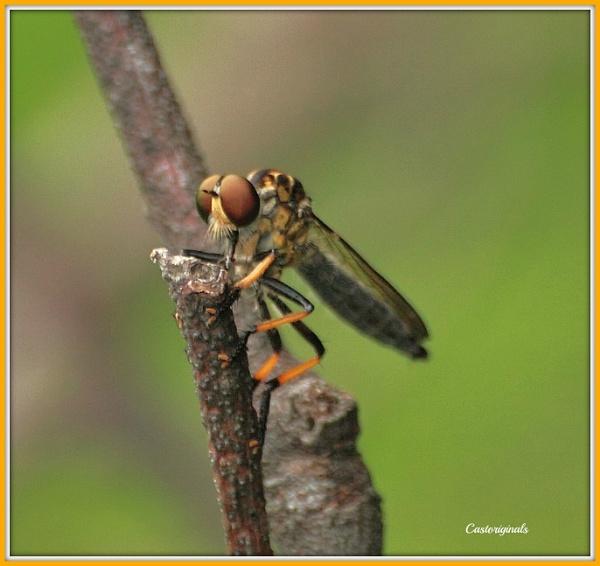 Thing on a Twig by Lynniesefforts