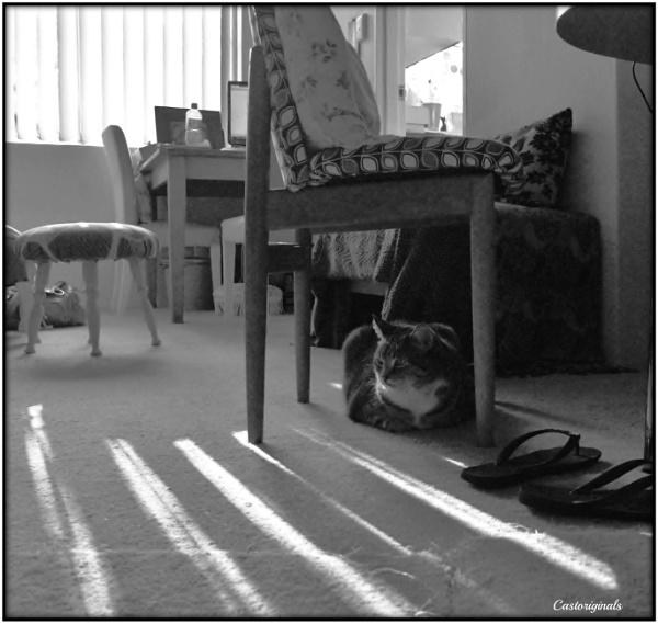 Reverse Shadows by Lynniesefforts