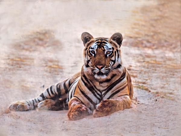 Photo in Bandhavgarh by JuBarney