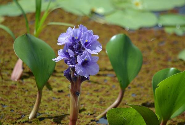 Bloom by Davidroid