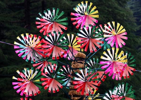 Colour Flutter by shmaher