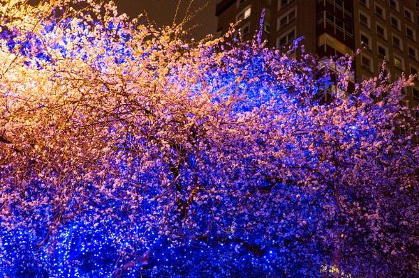 Urban Blossom by randomrubble