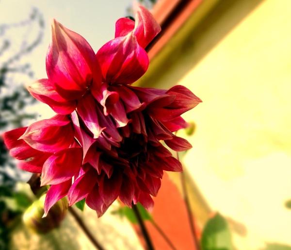 Spiky Flower :) by IshanPathak