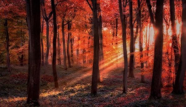 Autumn Woodland Sunrise by CeriDJones