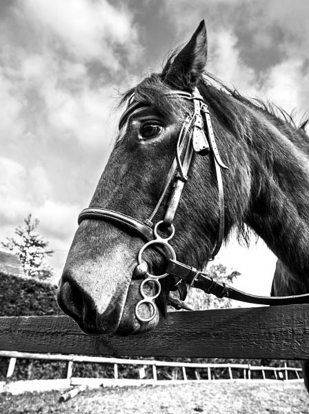 Black and White Woody by wheeldon